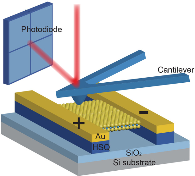 Piezoelectricity in a Free-Standing 2-D Material