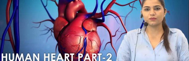 HUMAN HEART STRUCTURE || CLASS- 2 | BIOLOGY BY KAJAL MA'AM