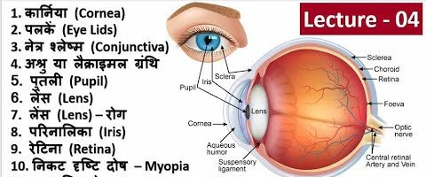 4.Eye Basic Structure in Hindi, Biology in Hindi by Nitin Sir Study91, Eye Related Question Answer